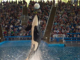 Shamu Show at Sea World. One of many other shows just 10 minutes away. - San Antonio house vacation rental photo