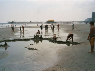 Kingston Plantation condo photo - Fun at the beach looking at the Apache Pier.