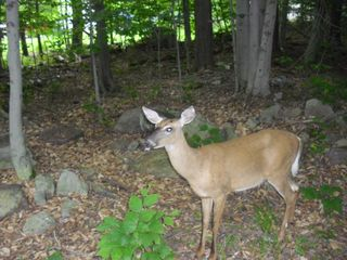 Tobyhanna chalet photo - Wildlife