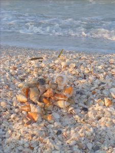 One of the world's greatest shelling beaches