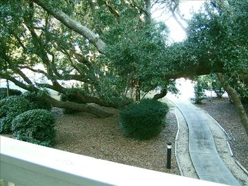 View from deck into live oaks grove and path to private beach access