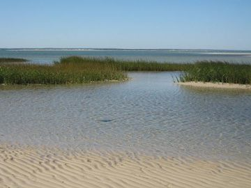 Local Cape Cod bay beach - crystal clear water & soft white sand