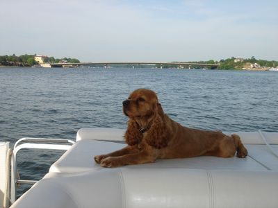 Hot Springs condo rental - Bring your dog! They love to go boating too. Jasper does for sure.