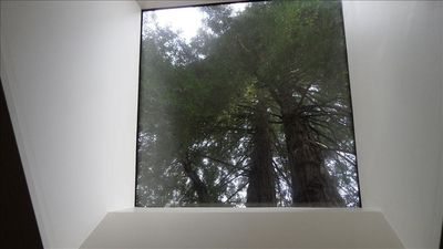 Skylight in the kitchen with view of the Redwood Trees.