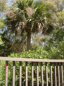 Kiawah Island villa rental - Porch View