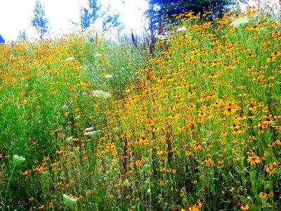 Ricky D's photo of LBC wildflowers.. Nice!