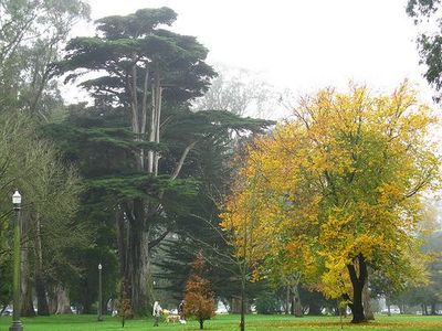 Golden Gate Park has bike trails and walking trails for nature seekers.