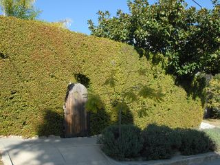 Santa Barbara house photo - A tall hedge encloses the property, enter through the wooden gate.