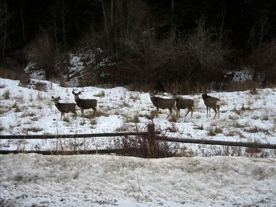 Deer on the property