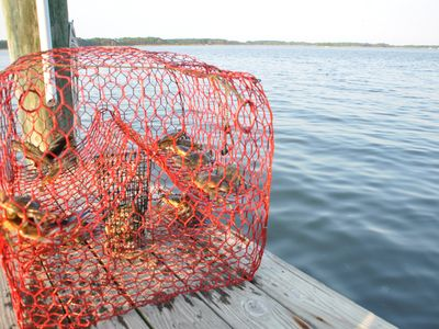 Crab from your private dock (cages and cooking pot are provided)