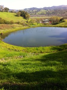 The Pond on our 54 acre property