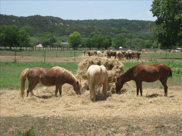 Feed the horses as they play in the pasture