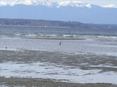 View of Olympic Peninsula at low tide