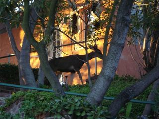 Hollywood house photo - Deer Outside Studio at Sunset