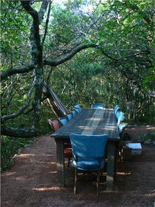 Dining table in forest