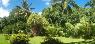 Hanalei house rental - The River Estate Grounds are lush, peaceful and extremely private. Relax!