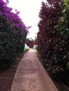 Wailea condo rental - Pathway to the beach