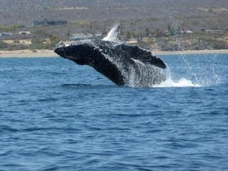 El Cardonal estate photo - Breaching whales can often been seen from shore.