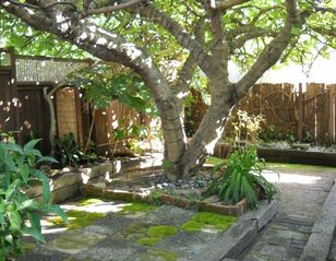 Berkeley house photo - Enchanting back yard
