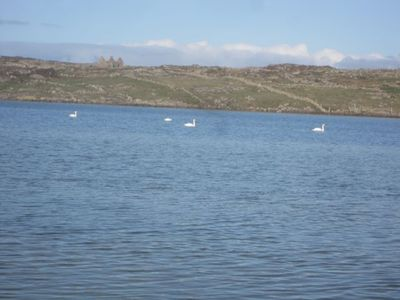 Freshwater lake on Omey Island with swans