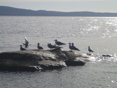 Nanaimo condo rental - sea gulls contemplating their next move