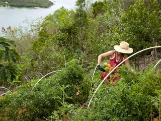 "Cruz Bay villa photo - Organic garden for ""Seed to Plate"" experiences."