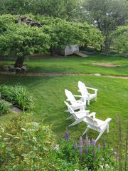Port Clyde cottage photo - Backyard: Wonderfully lazy days under apple trees