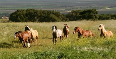 Our herd of horses on the lower ranch.