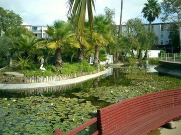 Point Loma condo rental - Lily Pad Forest in the courtyard.