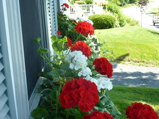 East Machias house photo - Pretty Window Boxes