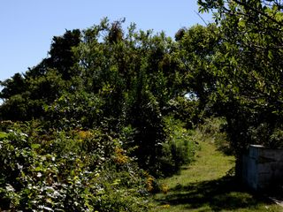 Chilmark house photo - Path down to pond and private beach