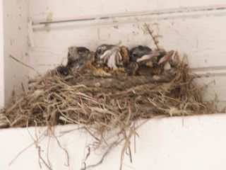 Wells cottage photo - One of many bird nests throughout property. Last years hatchlings.