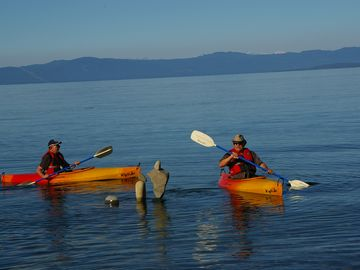 Kayaking along tranquil shoreline