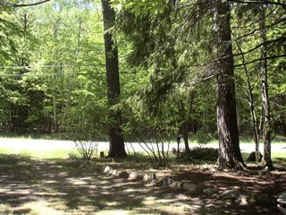 Northport cottage photo - View across the street to creature filled woods!