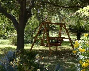 McAllen house photo - Enjoy swinging under the trees.