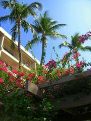 Kihei condo photo - Tropical surroundings with brilliantly colored flowers. Tennis court & 2 pools.