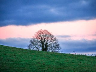 County Clare cottage photo - Sunset Tree in Burke's Field.