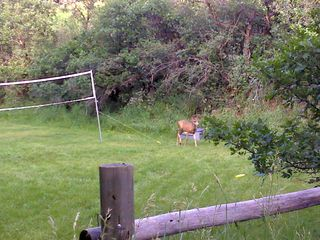 Glenwood Springs cabin photo - Even the wild life enjoys badminton!
