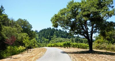 Drive past the vineyard to the front door.