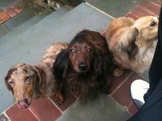 Our Pet Friendly Staff..Dachshund Approved - New Hope cottage vacation rental photo