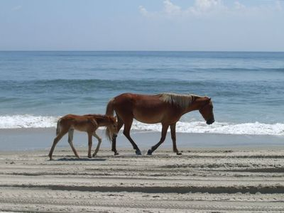 Corolla Wild Horses on the beach in front of Mermaid's Wake