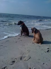 Cape May cottage photo - Pet Friendly Bay Beach at the end of the block