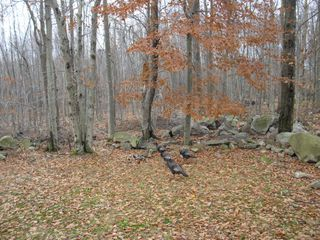 Tobyhanna chalet photo - Turkeys in yard fall