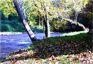 Alarka Creek in the Autumn . . . from down by the River Birch Cabin