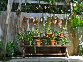 Coconut Grove house photo - Orchid garden
