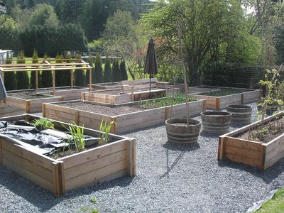 Owners new raised beds for vegetables