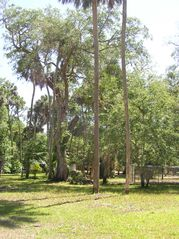 Steinhatchee cabin photo - View of Property - Very Spacious & Rural