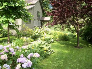 Woodstock cottage photo - The winding garden path
