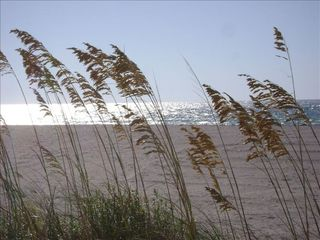 Sand Key condo photo - Sea Oats