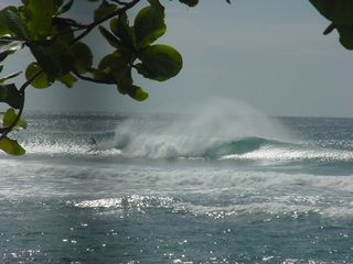 Rincon villa photo - Surf in front of Villa 'Dogmans'